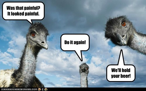 beer,encouragement,do it again,emus,Staring,friends,painful