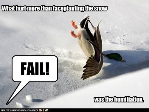 humiliation,duck,FAIL,snow,crash,faceplant