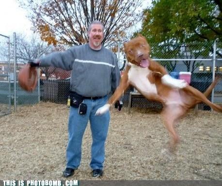 dammit,jump,pet,dogs