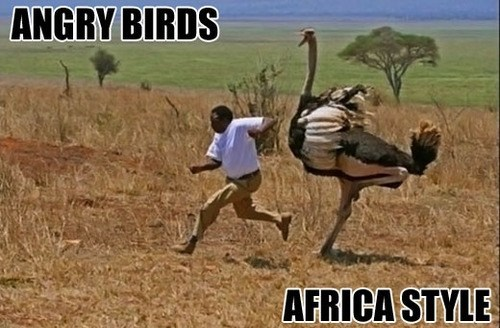 angry birds,africa,run,ostrich,g rated,AutocoWrecks