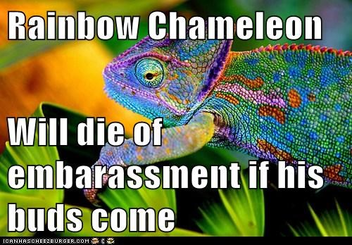 Rainbow Chameleon  Will die of embarassment if his buds come