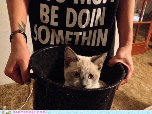 reader squee,pets,if i fits i sits,meow,soup,bucket,Cats,squee