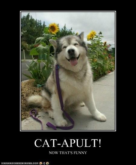 CAT-APULT!