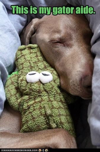 dogs,alligator,stuffed animal,cuddling,gatorade,what breed