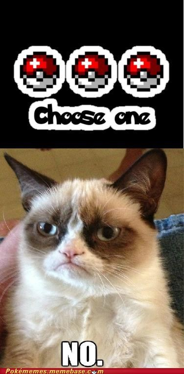 Grumpy Cat Refuses to Pick Between Starters!