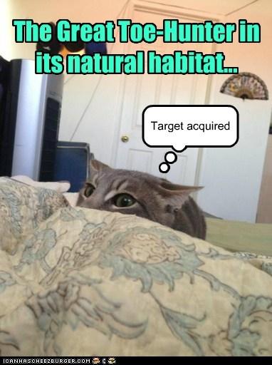 The Great Toe-Hunter in its natural habitat...