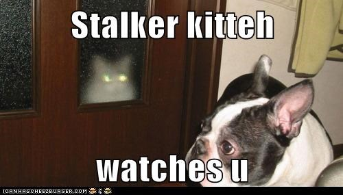 Stalker kitteh  watches u