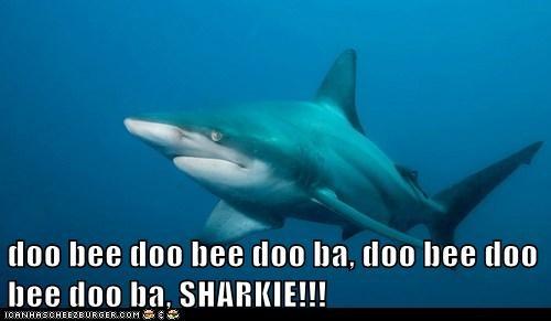 doo bee doo bee doo ba, doo bee doo bee doo ba, SHARKIE!!!