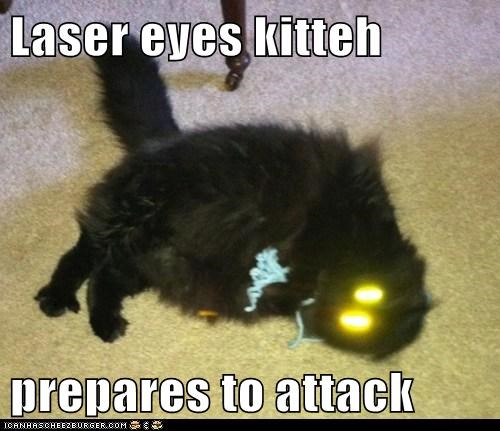 Laser eyes kitteh  prepares to attack
