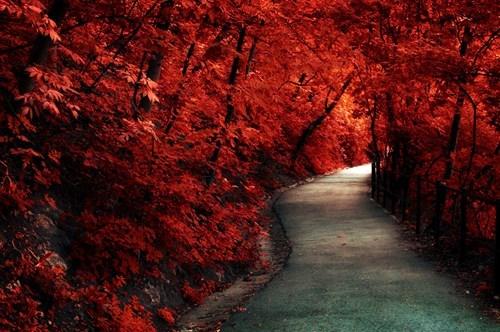 Fiery-Red Path