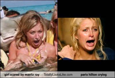Girl Scared by Manta Ray Totally Looks Like Paris Hilton Crying