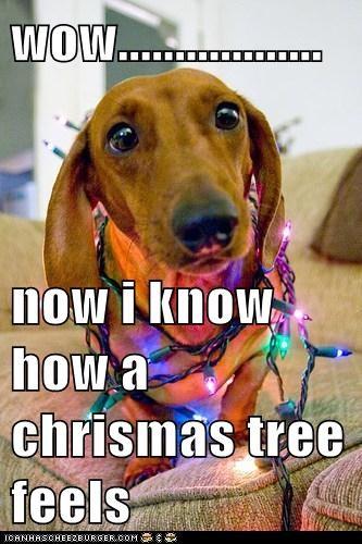 wow..................  now i know how a chrismas tree feels