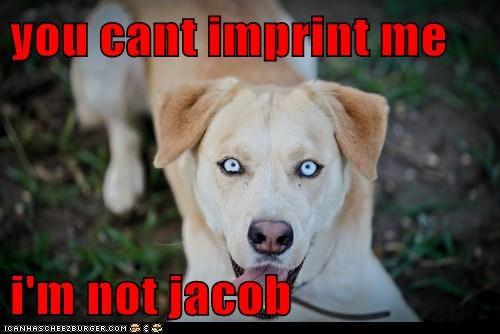 you cant imprint me   i'm not jacob