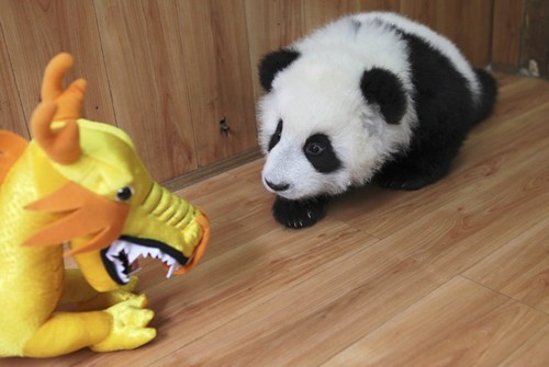 The Panda Cub and The Luck Dragon