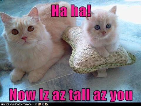 Ha ha!  Now Iz az tall az you