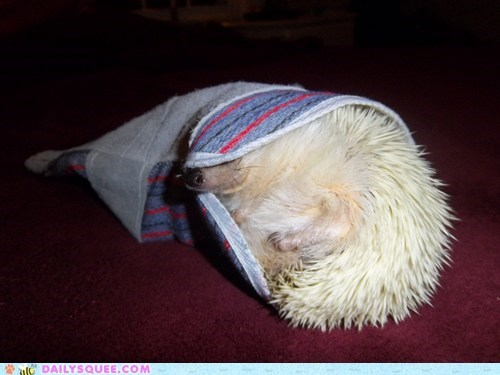 glove,reader squee,pets,stuck,if i fits i sits,hedgehog,squee