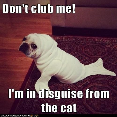 Don't club me!  I'm in disguise from the cat
