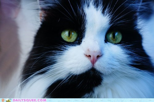 reader squee,pets,calico,Cats,squee