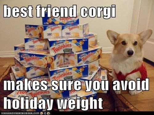 best friend corgi  makes sure you avoid holiday weight