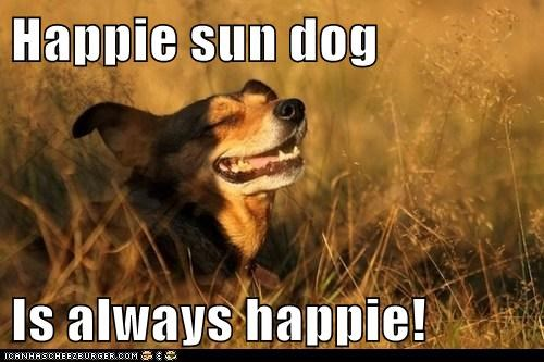 Happie sun dog   Is always happie!