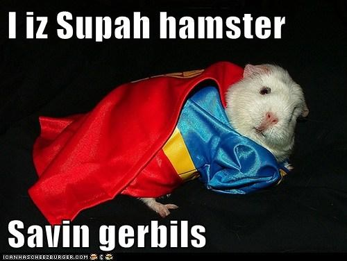 I iz Supah hamster  Savin gerbils