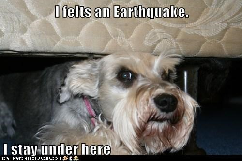 I felts an Earthquake.  I stay under here