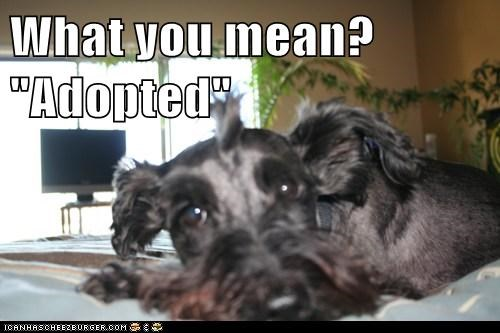 "What you mean? ""Adopted"""