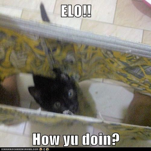 ELO!!  How yu doin?