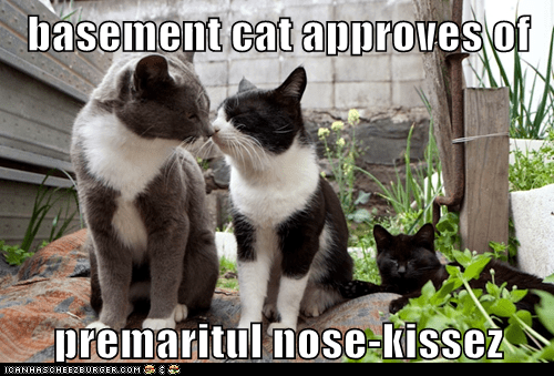 basement cat approves of  premaritul nose-kissez