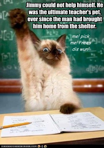 Jimmy could not help himself. He was the ultimate teacher's pet, ever since the man had brought him home from the shelter.