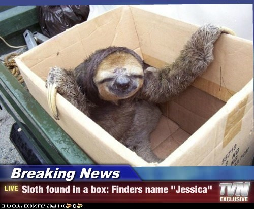 """Breaking News - Sloth found in a box: Finders name """"Jessica"""""""