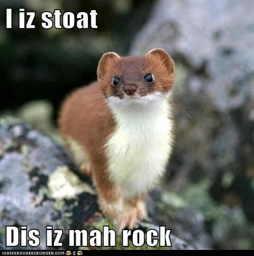 I iz stoat  Dis iz mah rock