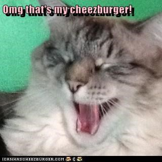Omg that's my cheezburger!