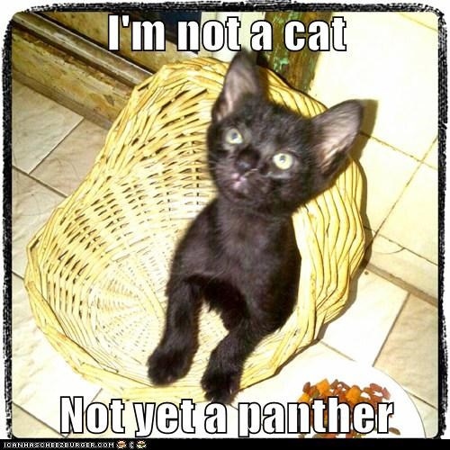 I'm not a cat  Not yet a panther