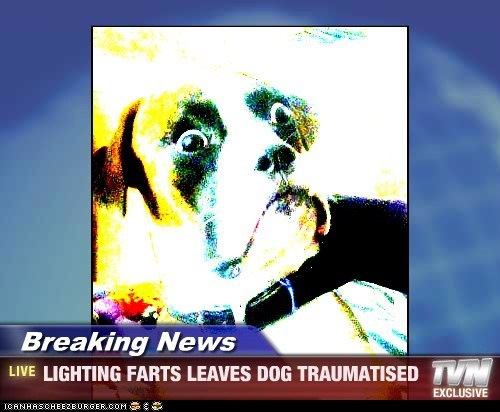 Breaking News - LIGHTING FARTS LEAVES DOG TRAUMATISED
