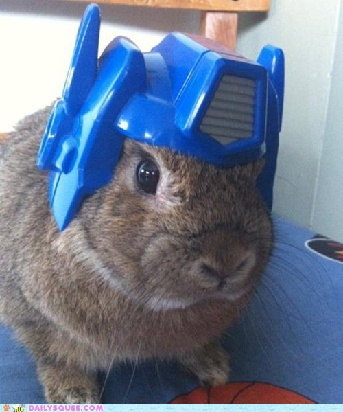 transformers,Bunday,reader squee,rabbit,bunny,squee
