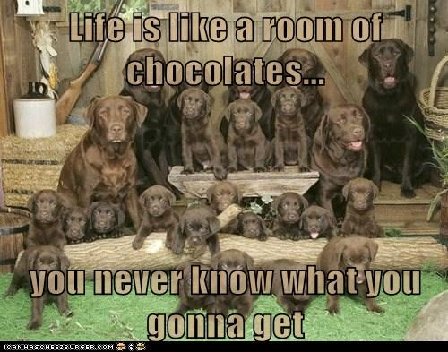 Life is like a room of chocolates...  you never know what you gonna get