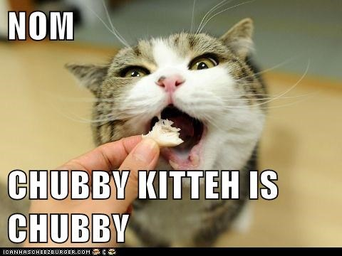 NOM  CHUBBY KITTEH IS CHUBBY