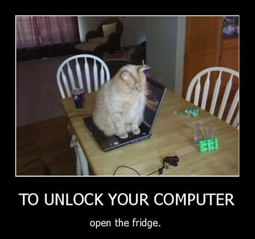 laptops,computers,annoying,in the way,captions,fridges,unlock,Cats