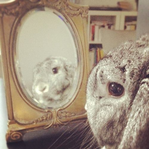Bunday,mirror,introspection,rabbit,bunny,squee,whiskers