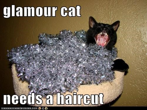 glamour cat  needs a haircut