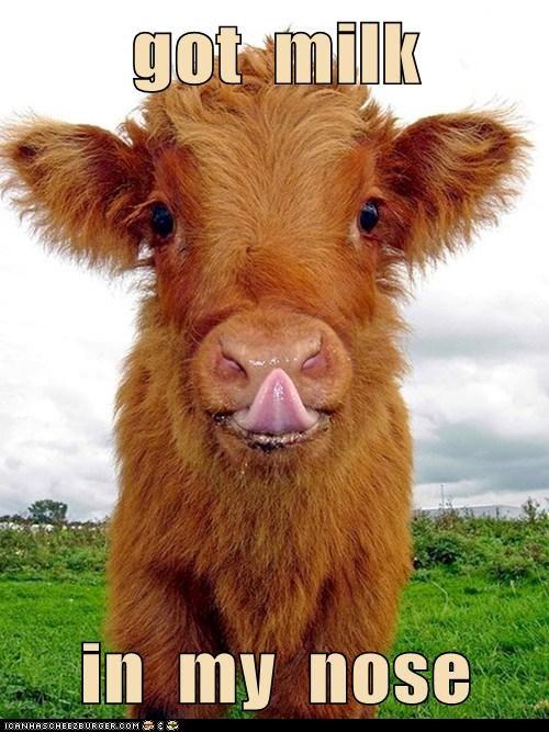 got  milk  in  my  nose