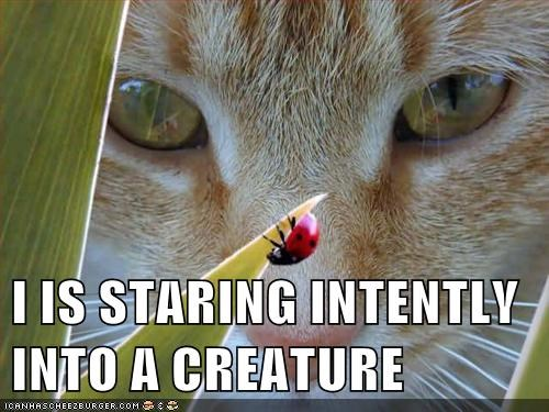 I IS STARING INTENTLY INTO A CREATURE