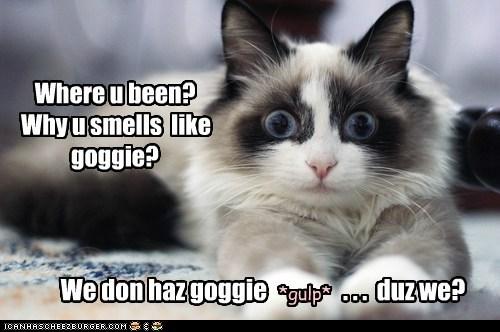 dogs,gasp,captions,own,surprise,pet,Cats