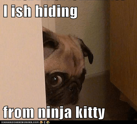 I ish hiding  from ninja kitty