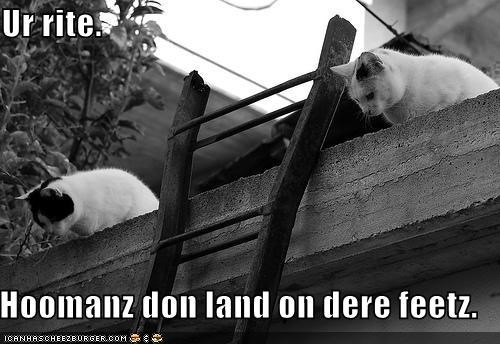 Ur rite.    Hoomanz don land on dere feetz.