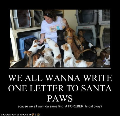WE ALL WANNA WRITE ONE LETTER TO SANTA PAWS