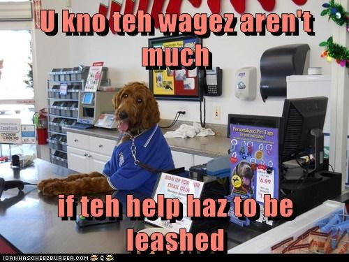 U kno teh wagez aren't much  if teh help haz to be leashed