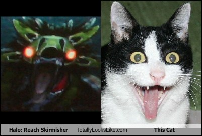 Halo: Reach Skirmisher Totally Looks Like This Cat
