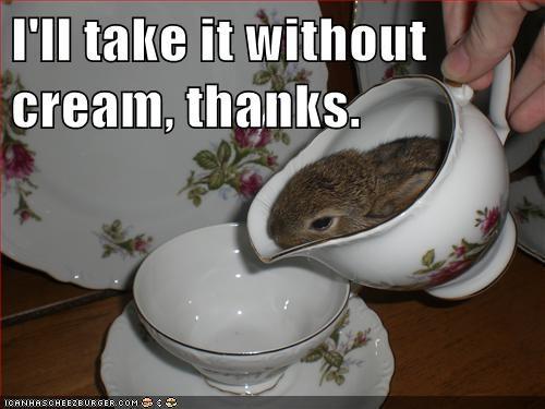 bunnies,teacup,drinking,pouring,tea,cream